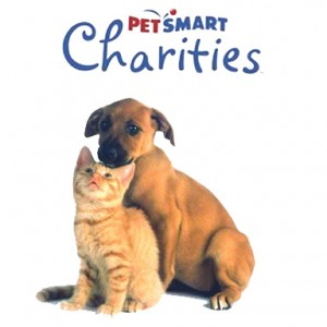 pet smart dog and cat