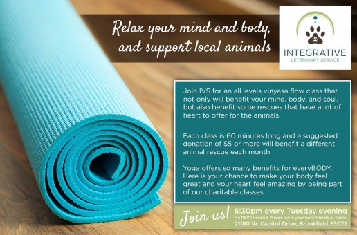 Yoga Classes at Integrative Veterinary Service